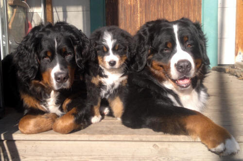 3 Generations, Lady 2,5 year, Ruter Dam 8 weeks, Keno 7 year