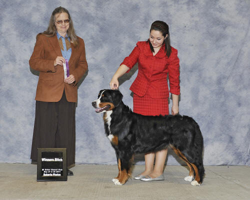 Libby 21 months, her 1st points towards their AKC championship